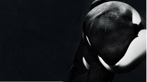blackfish_2013-1920x1080